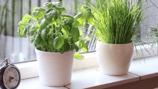 Простые идеи для украшения кухни и столовой