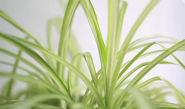 6 советов для чистого, здорового и нетоксичного дома